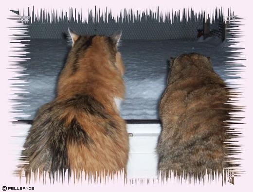 Schnee in Fellbandes Fellreich!