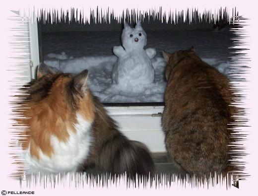 Fellbandes Schneekatz'!